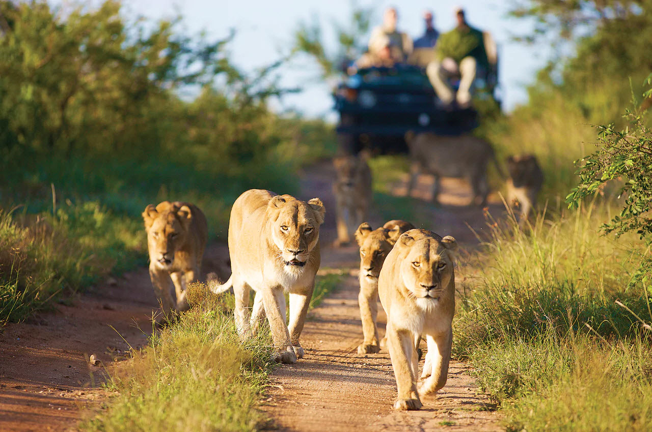 South Africa | Big Beautiful World Travel | Disney Travel Agent Cathi Maziarz